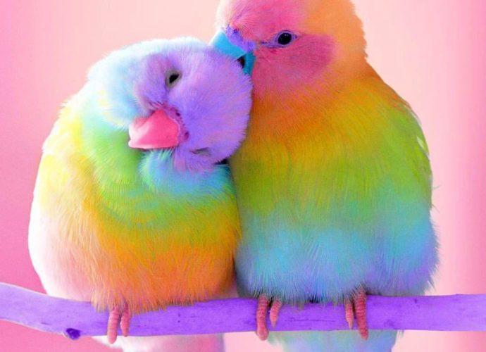 Попугайчики цвета радуга попугаи