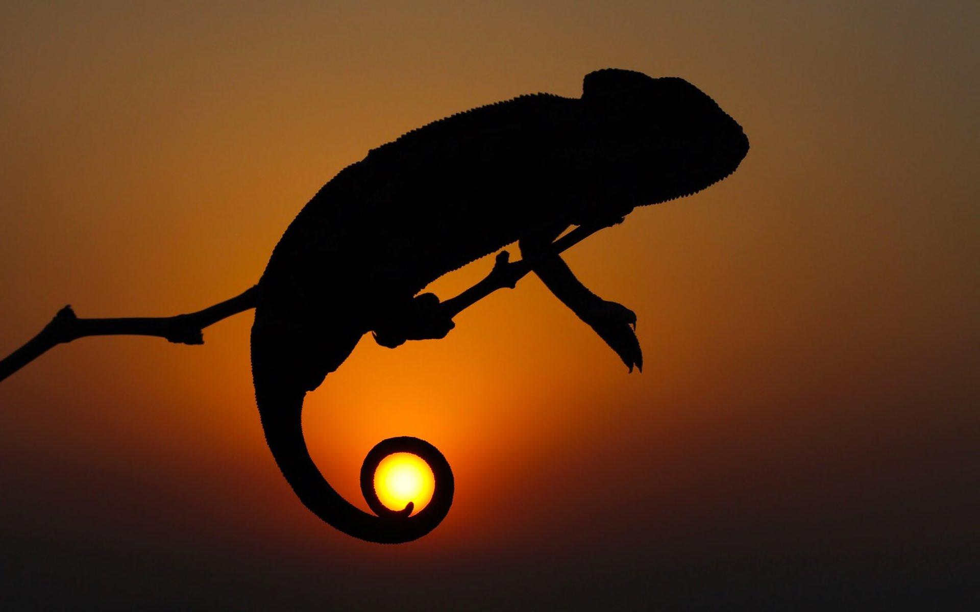 Хамелеон держит солнце хамелеон солнце закат